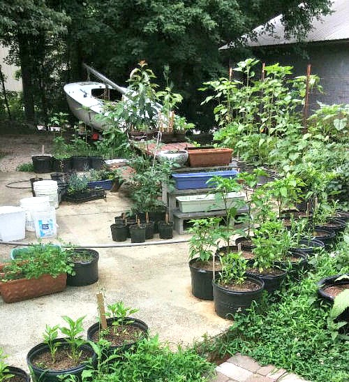 You can grow vegetables in small yards