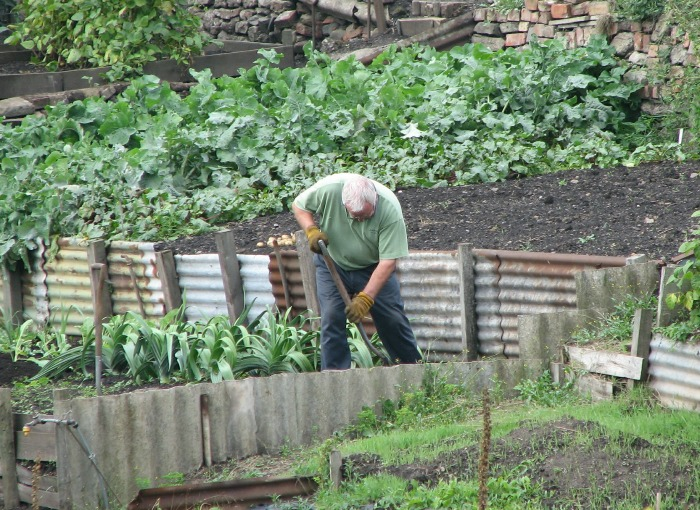 Tips and advice for making your vegetable garden the best it can be.