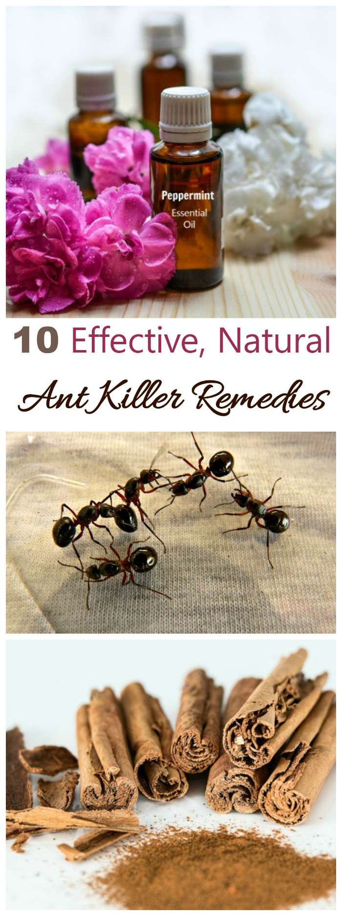 Ant Killer Remedies Natural Ways To Repel Ants Effectively