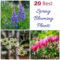 My 20 favorite spring blooming plants