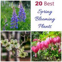 My 20 favorite spring blooming plants
