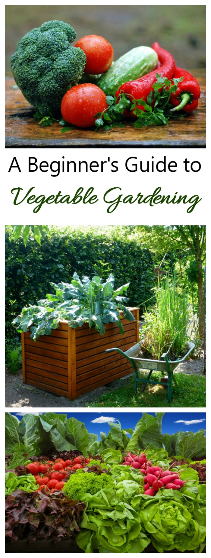 Growing your own vegetables is one of the highlights of summer gardening. There is nothing quite like the taste and freshness of home grown veggies! My vegetable gardening guide will lead you through the process,, from starting seeds to growing in containers to the actual harvest.