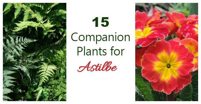 Astilbe Companion Plants What To Grow With Astilbe