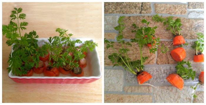 Carrots week 4