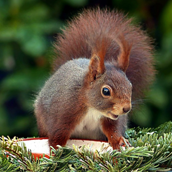 Natural Squirrel Repellent Ideas