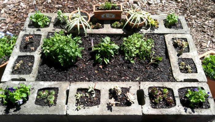 Top view of the raised bed