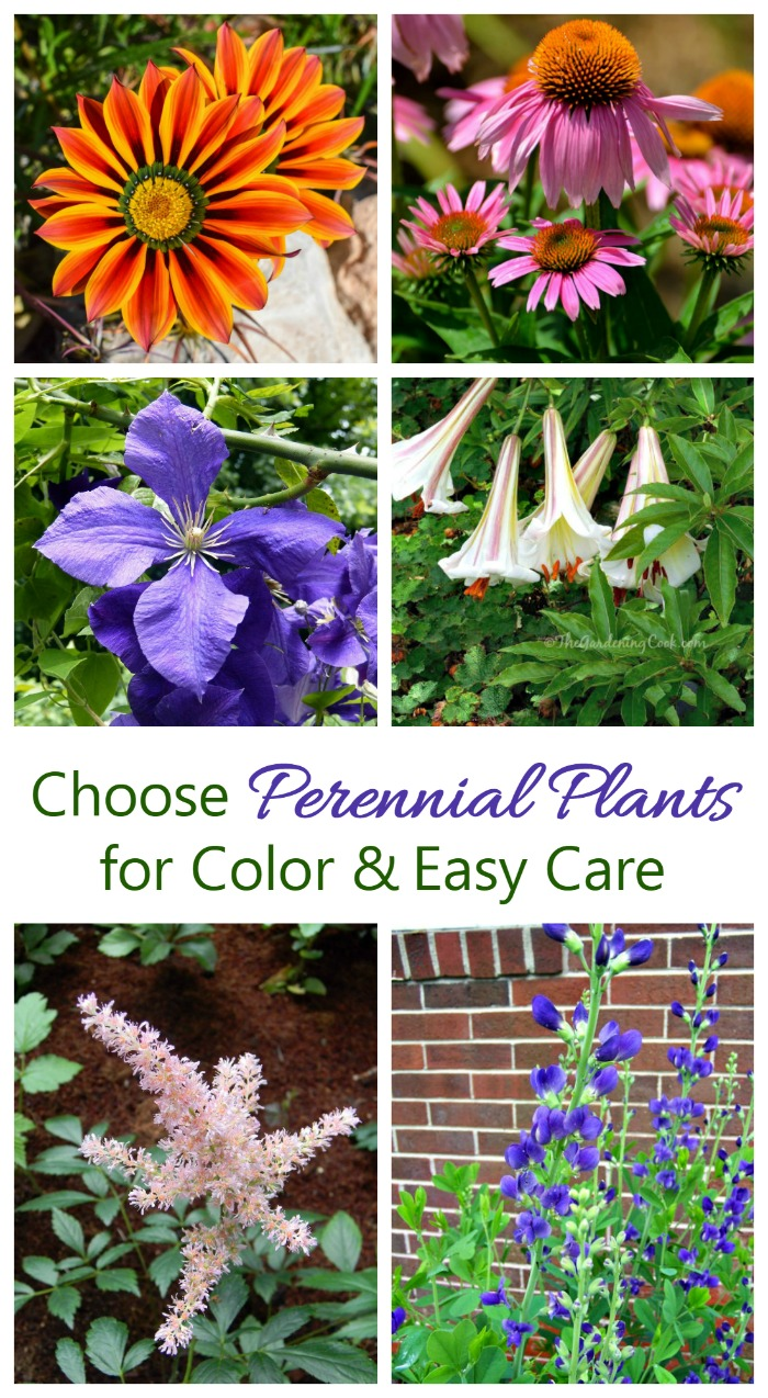 Perennials are easy to care for and come back year after year.