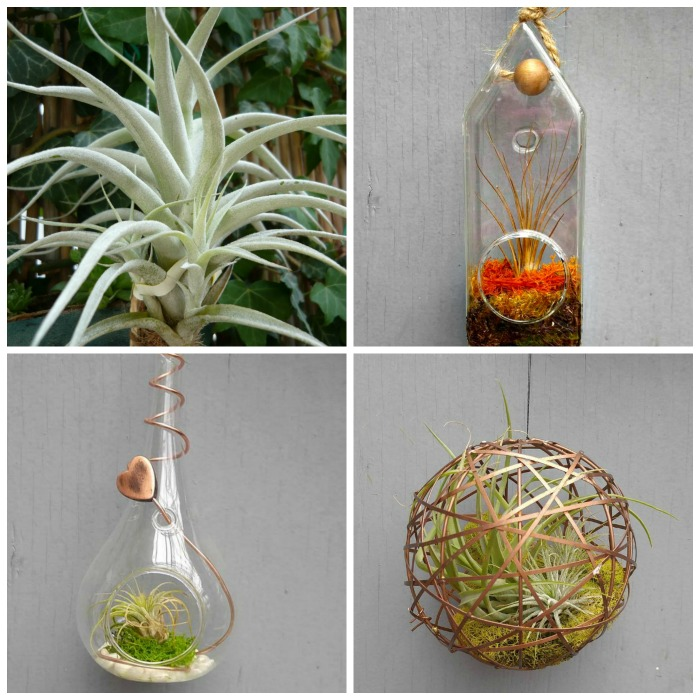 Succulent planters 25 fun looks that show you can plant for Air plant holder ideas