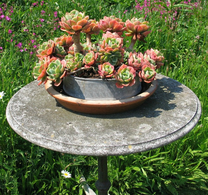 Succulent spring form pan planter