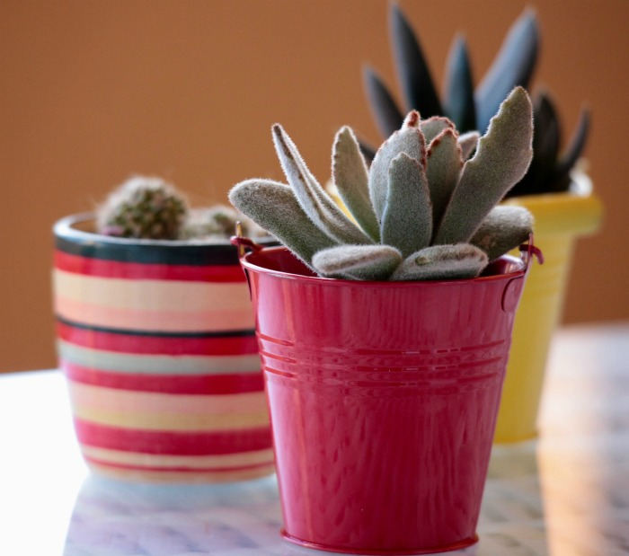 Colorful Succulent planters