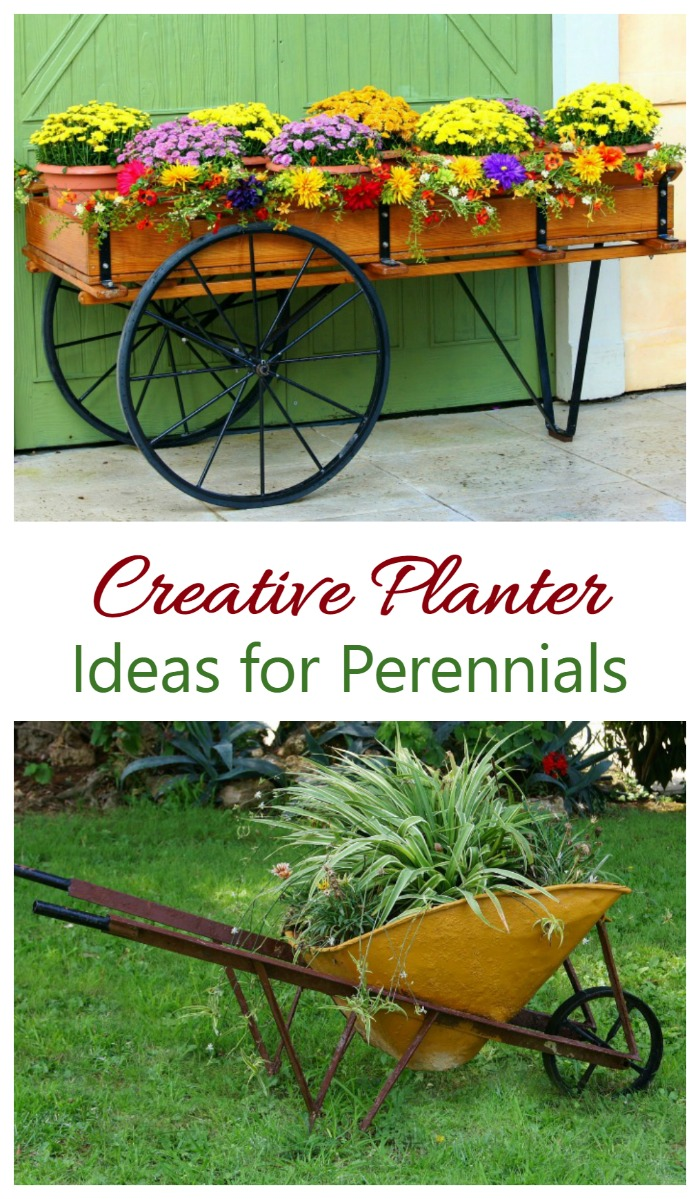 Perennials can be grown in planters too. See some creative ideas on the Gardening Cook