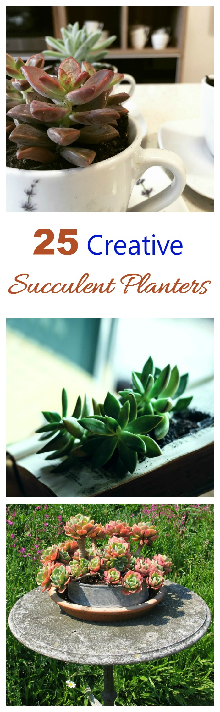 These creative and fun succulent planters will show you that you can plant these hardy plants in just about anything that will hold dirt.