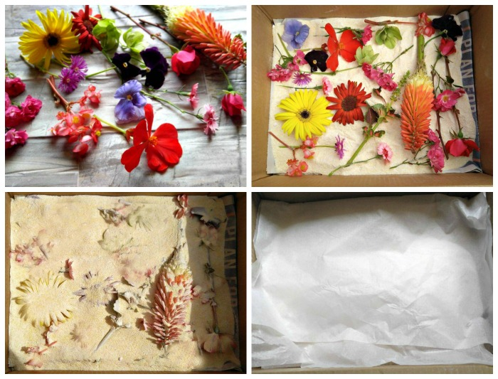 How to preserve flowers with Borax
