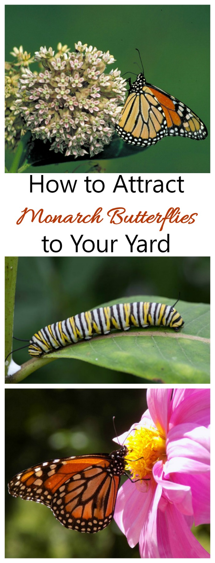 Monarch butterflies are on a sharp decline nationwide. But there are somethings that you can do to help make sure they don't end up on the endangered list.