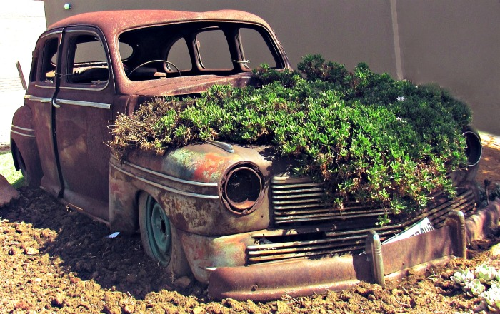 Old car Succulent planter