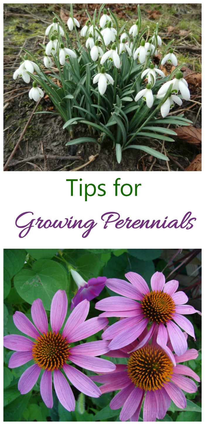 Want color all season long with plants that return year after year? Try growing perennials.