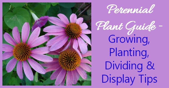 Growing Perennials How To Grow Perennial Plants The