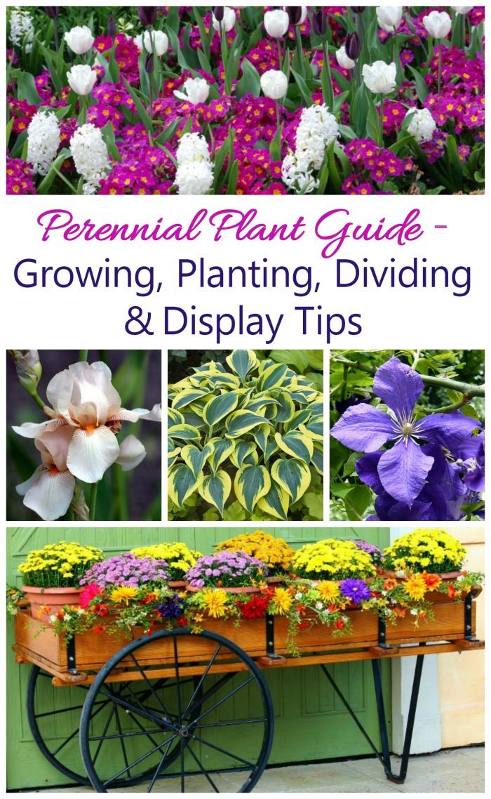 This guide for growing perennials gives tips and trips for plant types and how to grow, propagate and display them.