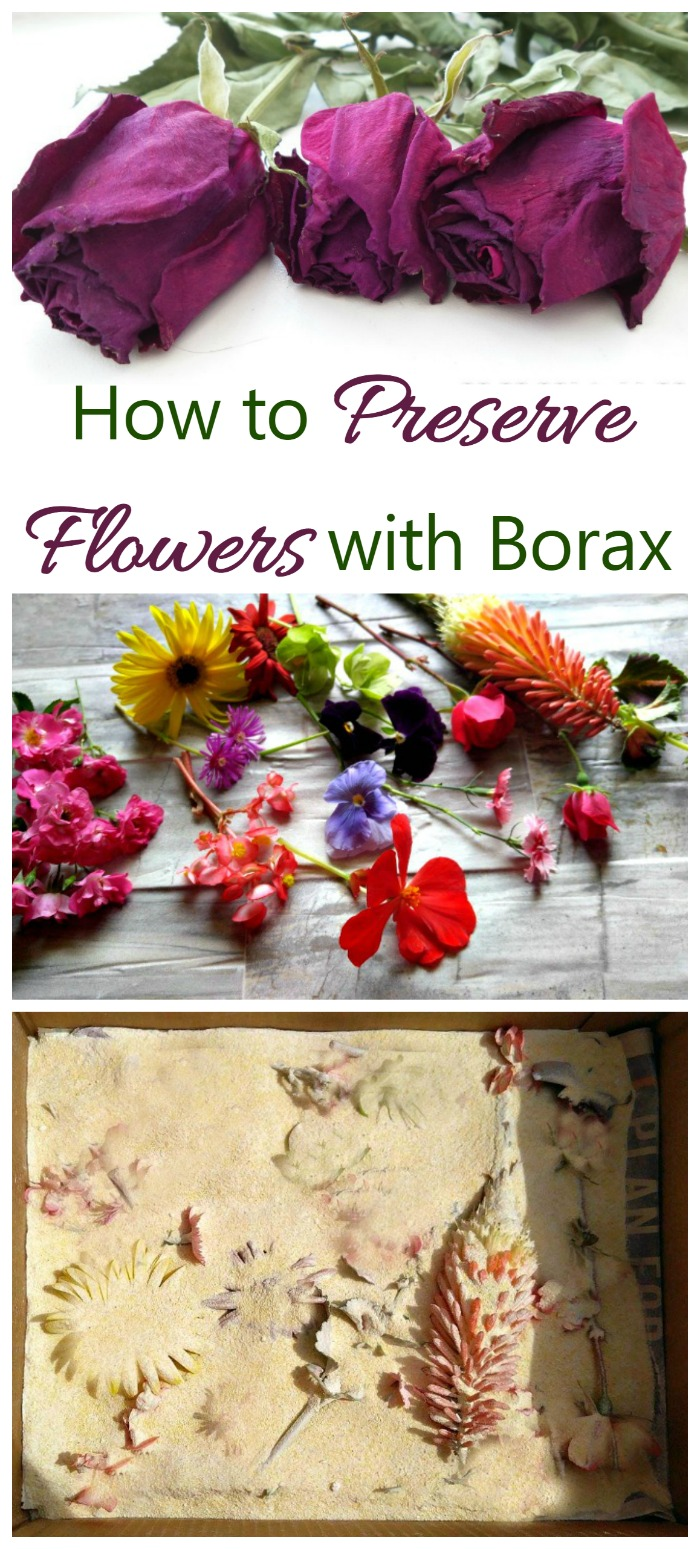 Preserve Flowers With Borax Tips For Best Results The Gardening Cook