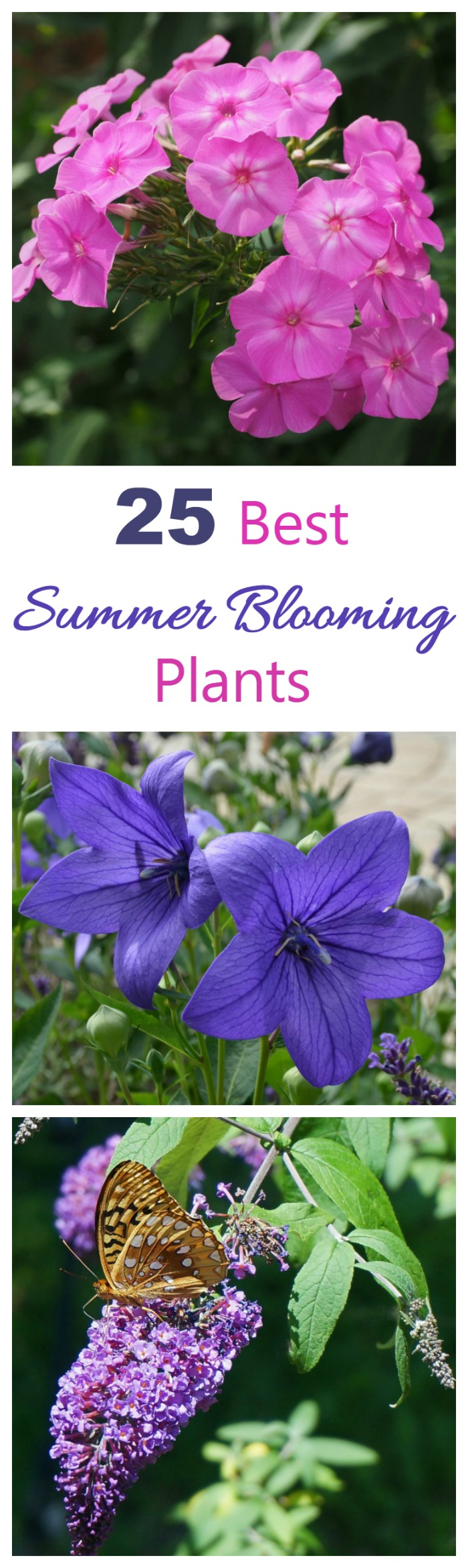 These summer blooming plants will give you dramatic color all summer long , and in many cases, right into the fall. Grow a few of these to make your yard the talk of the neighborhood.