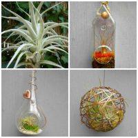 air plant planters