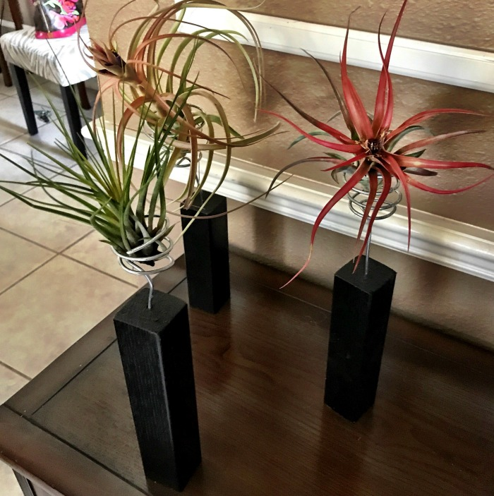 Block display for air plants
