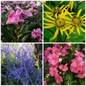 Plants that don't need deadheading