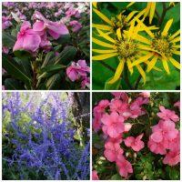 Plants that don't need deadheading