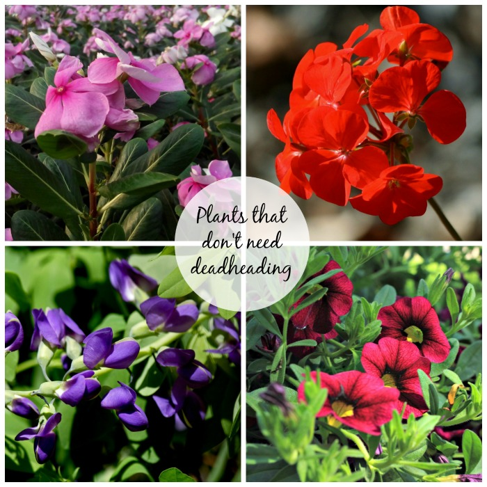 Plants That Don T Need Deadheading