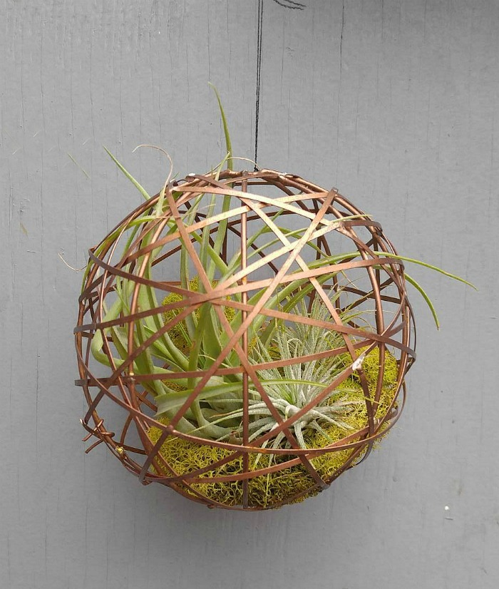 Air Plant Holders Containers To Display Your Tillandsia Collection