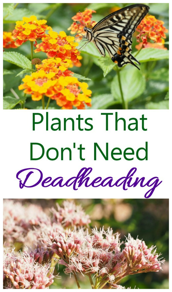 Plants that don't need deadheading to stay beautiful all summer long