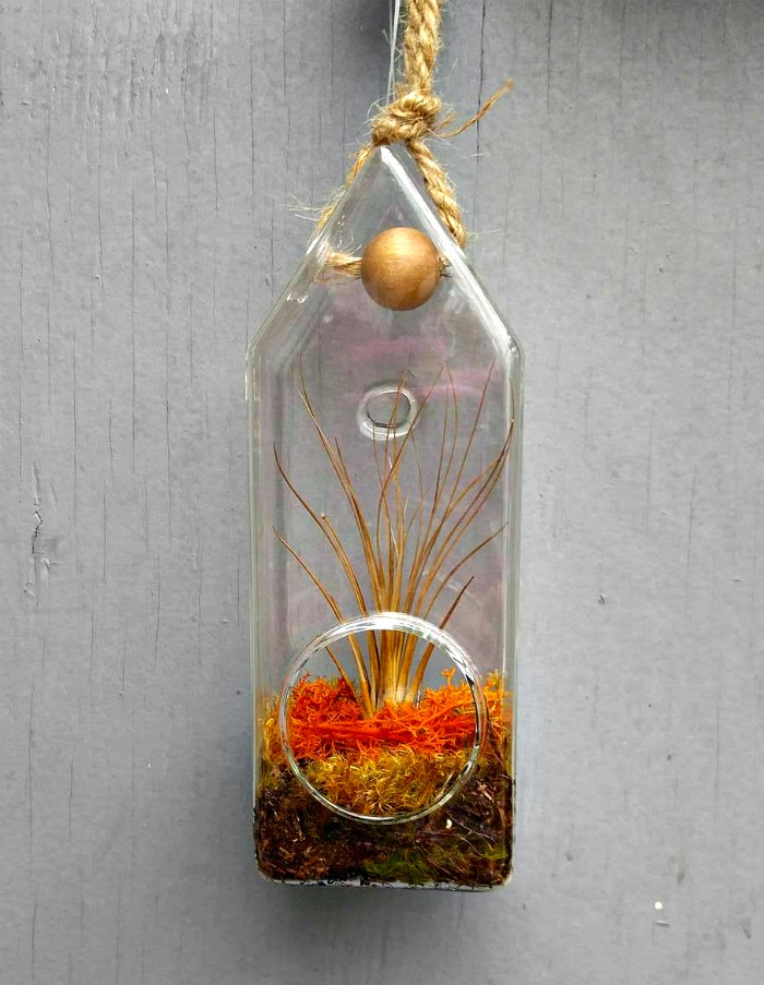 Glass bottle air plant holder