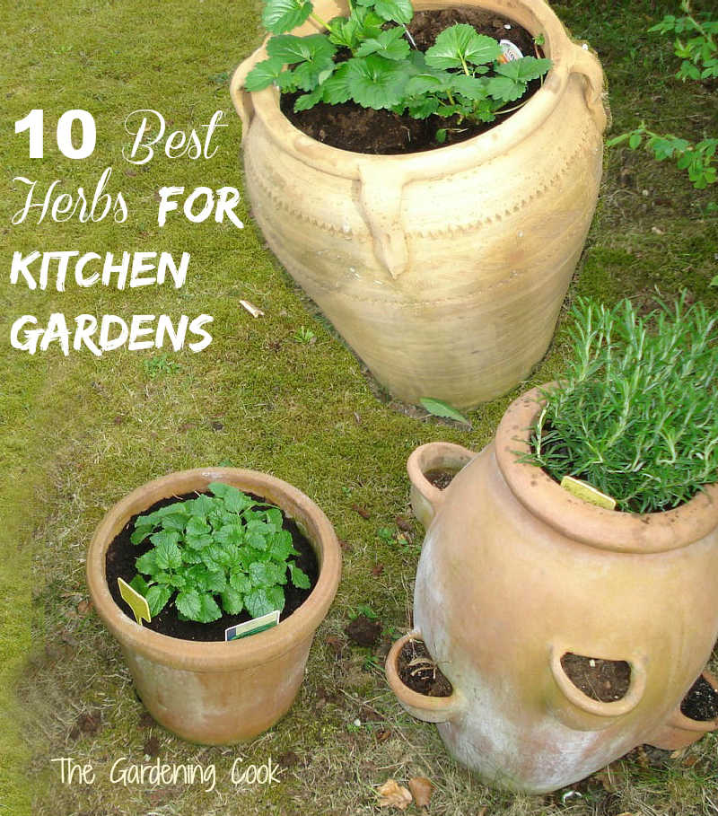 Herbs in large earthenware jugs and word 10 Best herbs for kitchen gardens.