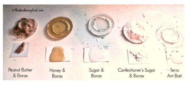 Borax Ant poison Test Results