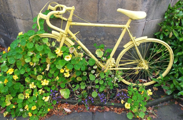 Yellow bicycle covered in vines