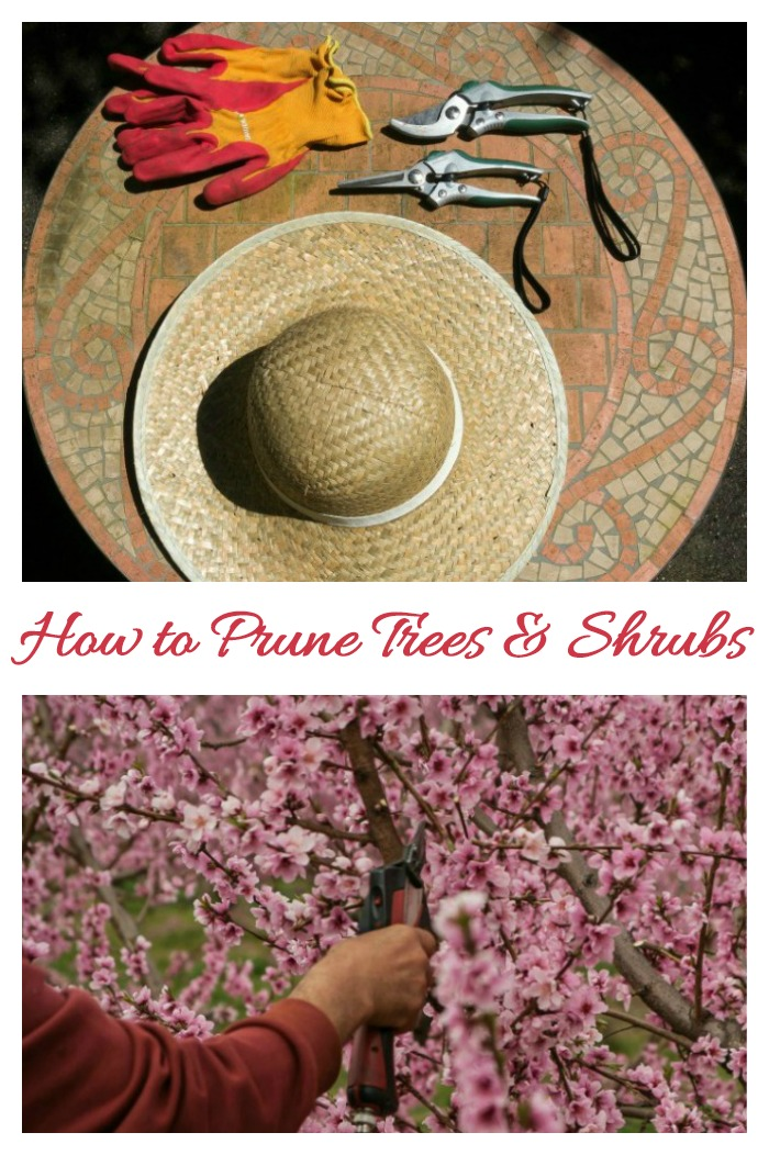 These pruning tips will make your trees and shrubs look as though they have been pruned by a pro!