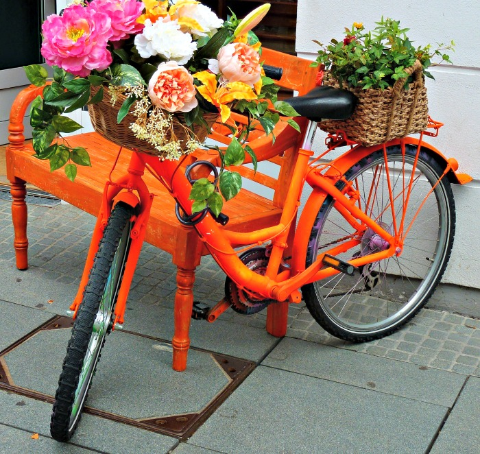 Peonies in an orange bicycle planter