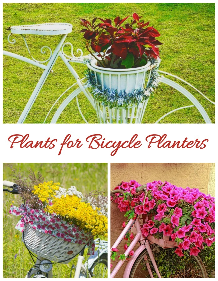 Plants to use in bicycle planters