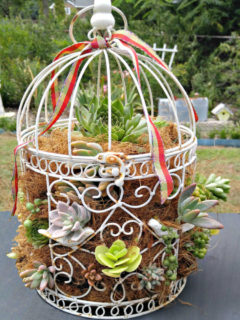 Bird cage on a table planted with suculents.