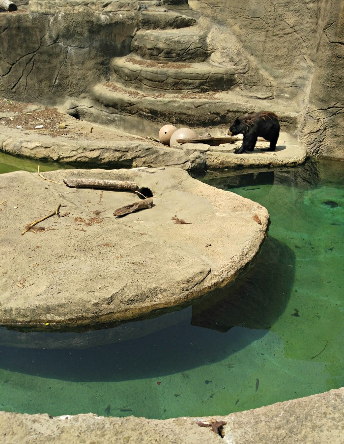 Brown bear exhibit