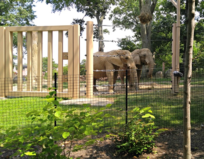 Elephant exhibit at the Cleveland Zoo