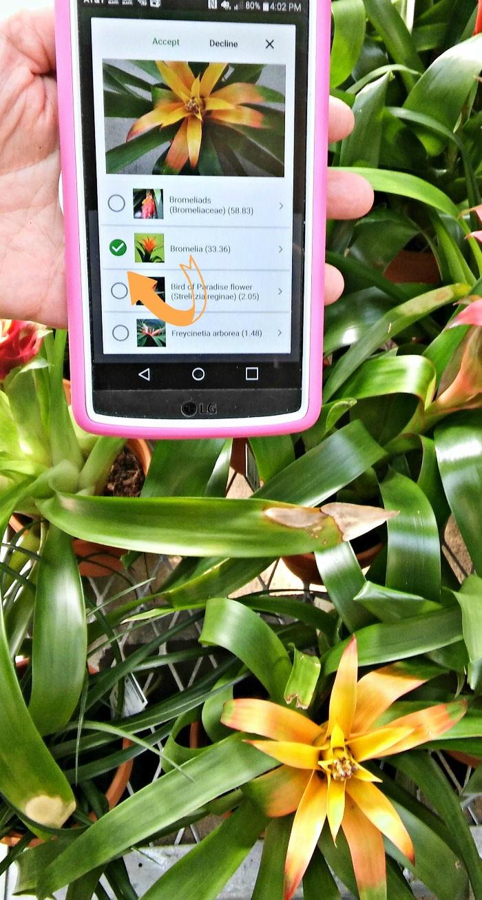 PlantSnap identifying bromeliads