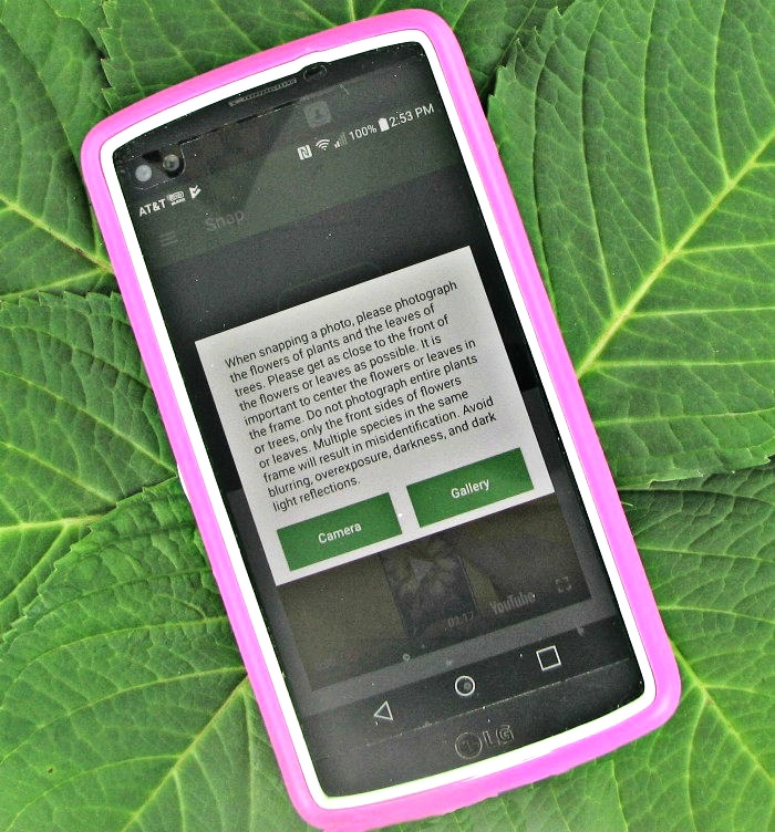 Plant snap app with view of gallery and camera on a pink phone device