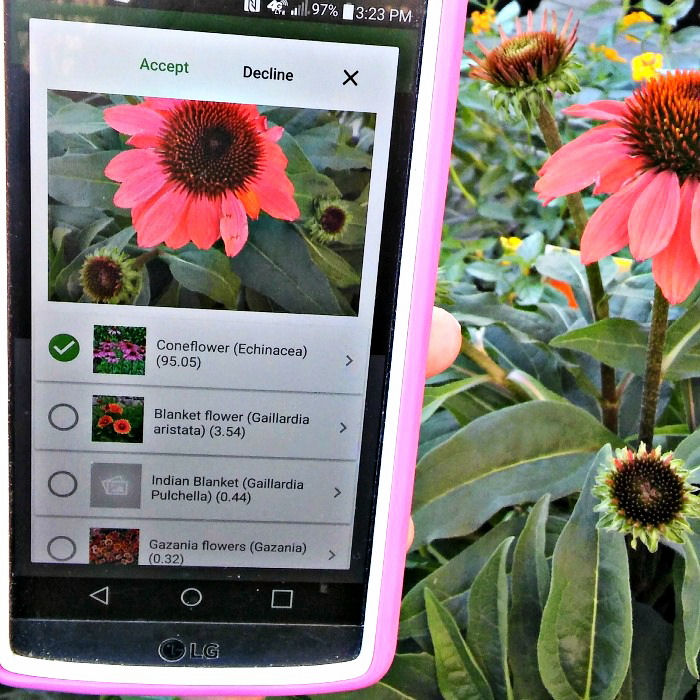 PlantSnap app and coneflower picture.