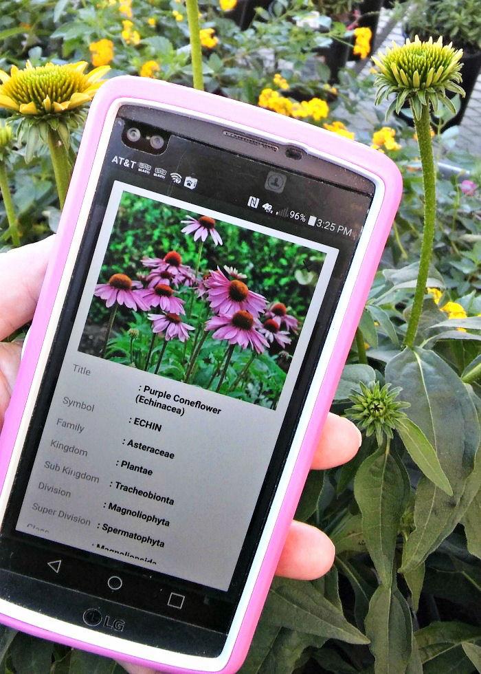PlantSnap details page