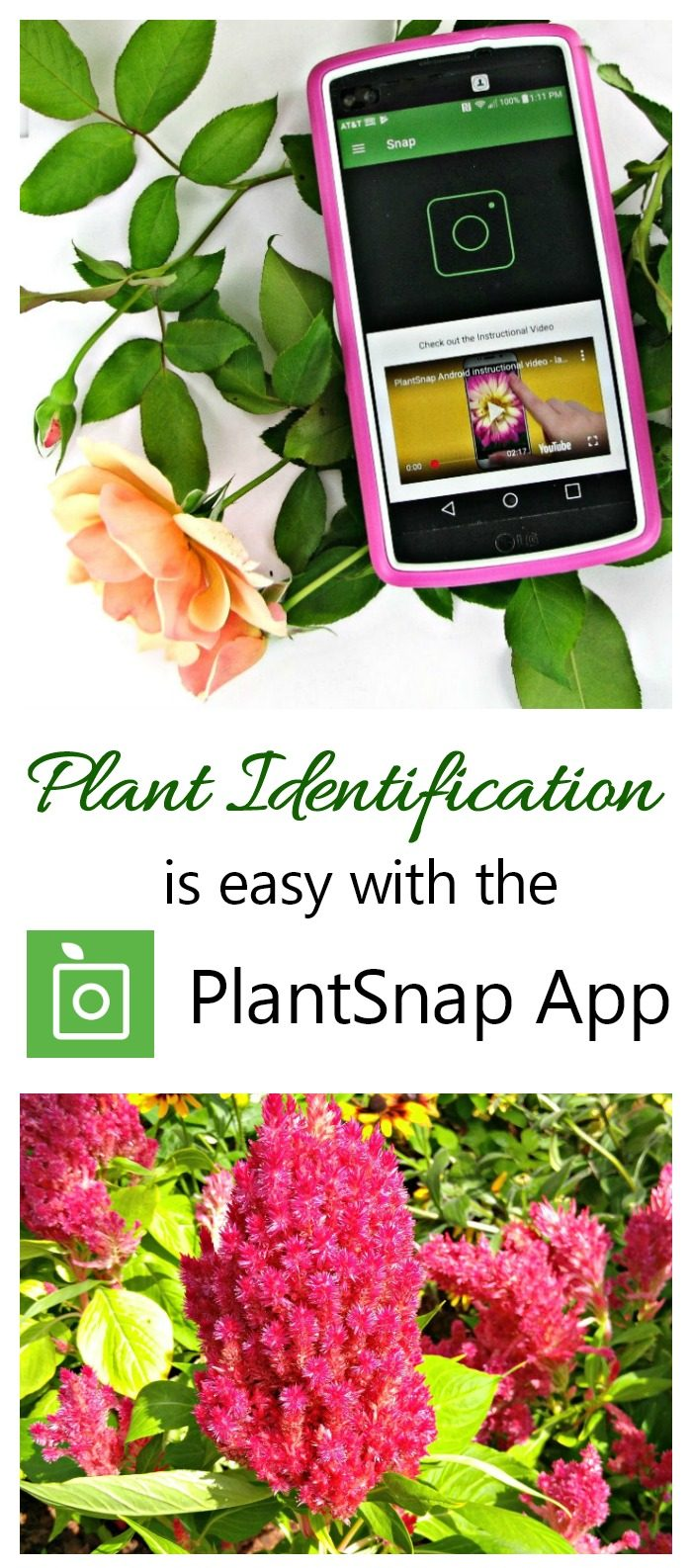 Pink flower with phone app and words Plant Identification is easy with the PlantSnap App.