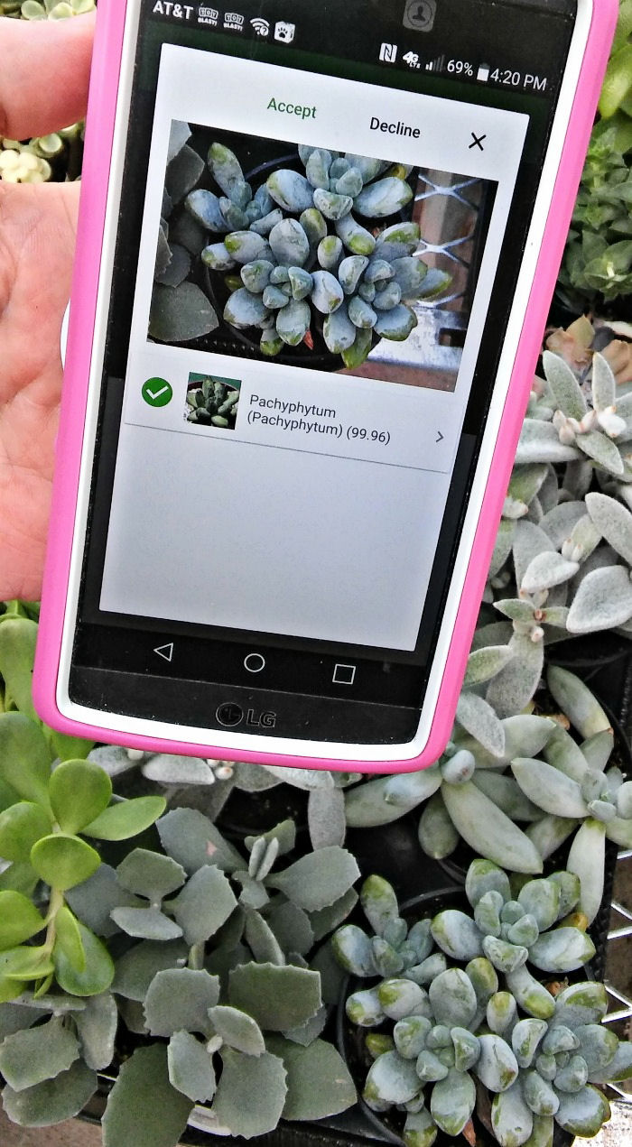 PlantSnap mobile app with picture of a succulent.