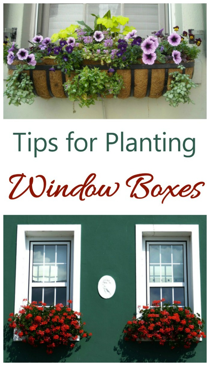 Tips for planting window boxes to add curb appeal to your home