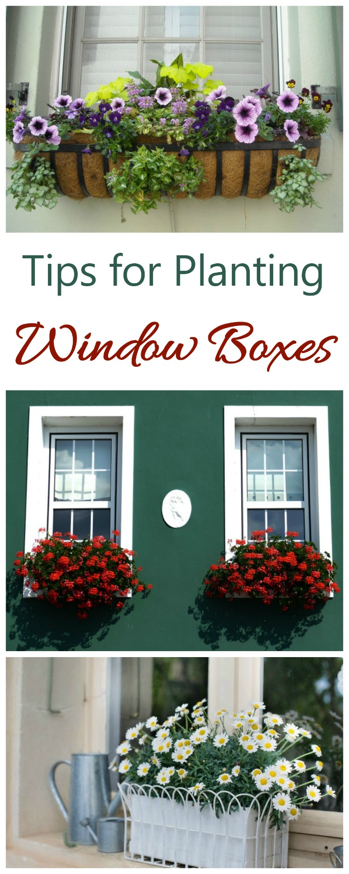 Window boxes add instant curb appeal to your home.These tips will show you how to plant and use them. #windowboxes #curbappeal