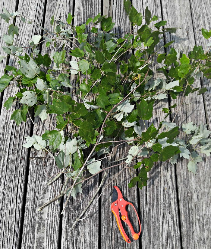 tree branches and pruners
